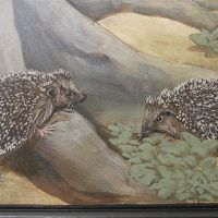 Hedgehogs.
