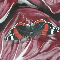 Red Admiral on Red Cabbage