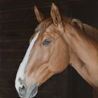 Horse Portrait : Paddy,